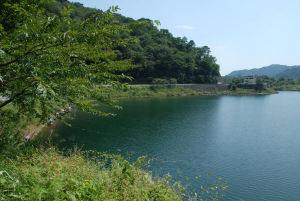 精進湖の水面