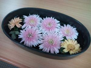 水に浮かべた菊の花