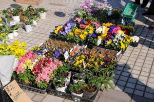 テント前ではビオラ、パンジーなど、花も販売