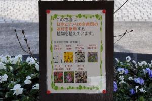 花壇には日米友好を象徴する植物が
