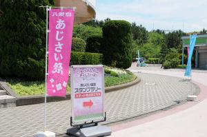 八景島・あじさい祭