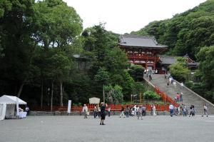 鎌倉八幡宮・大銀杏