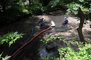 柳原神池の大掃除