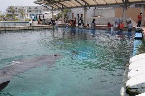 イルカが泳いでいます