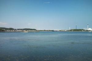 波打ち際は海藻がいっぱいでした