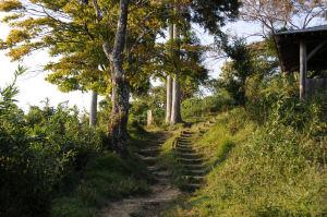 ここの山道を上って行きます