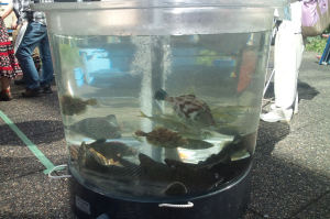 中庭では水槽などに魚貝類を展示