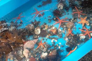 魚貝類を展示