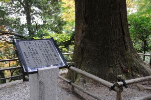 東京都指定天然記念物「高尾山 杉並木」