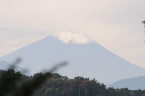 木々の間から富士山が見えます