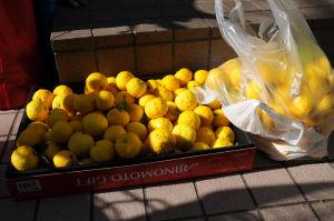 黄色く色づいたきれいな柚子です