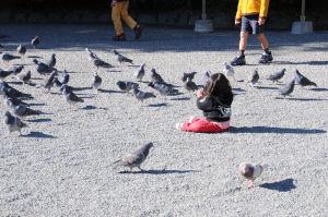 保育園児がハトと遊んでいます