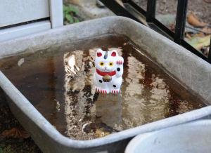 「招き猫」を氷の上に置きパチリ