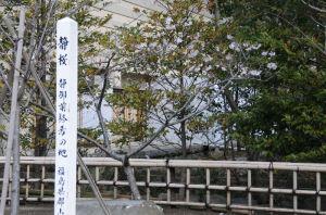 研修道場近くにある『静桜』