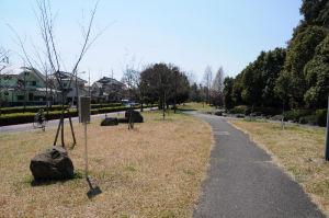 小柴崎緑道、南側