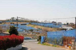 横浜柴シーサイドファーム農園