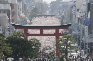 拝殿からの市内、段葛の桜は満開