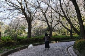 花見がてら散歩する人