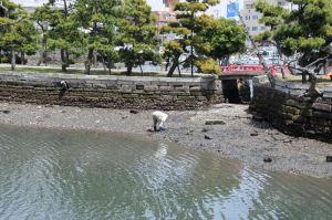 琵琶島神社でも貝を採る人