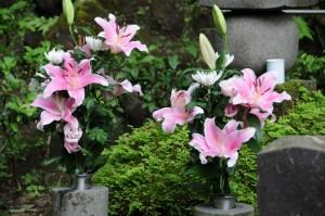 きれいな百合の花が