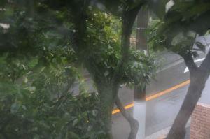 強風で柿の木が大揺れ