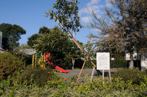 白梅公園の「イペの木」