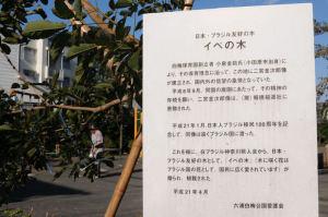 日本・ブラジル友好の木