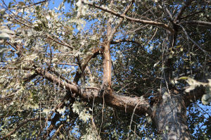 木の枝も折れていました