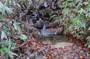 小川の水も冷たそう