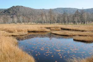 池に落ち葉が浮いてきれいな風景
