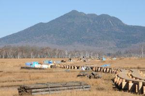 木道整備が長い区間行われています