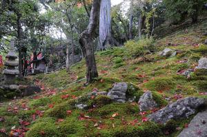 色づいた落ち葉がきれい