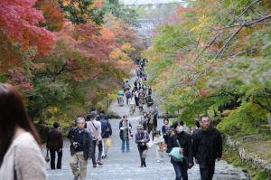 参道の木々はきれいに紅葉