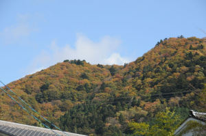 山々の紅葉がきれいです
