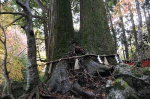 2本の杉の大木が