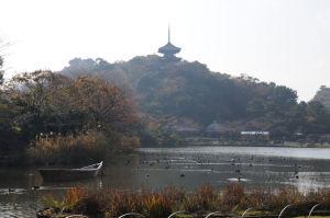 紅葉の三溪園