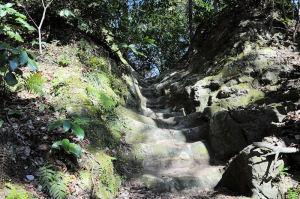 裏山へ上る道