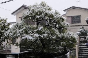 春を告げる淡雪でした