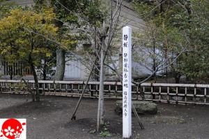 福島県郡山市の静桜