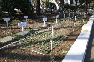 チューリップの苗が植えられています