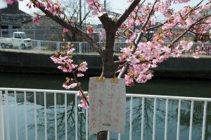 1本の桜の木には札が掛けられ