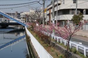右の建物が横浜市立八景小学校