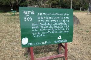 小柴崎緑道脇のさくら