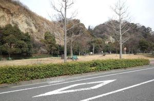 道路沿いの緑地は広い場所