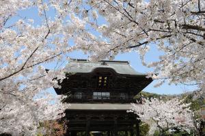 鎌倉・寺社特別拝観めぐり