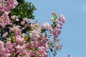 春の花が咲きました