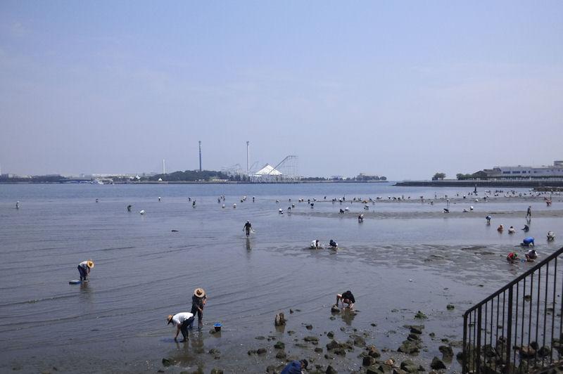 野島海岸で潮干狩り