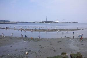 野島海岸の西側