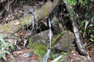 きれいな岩清水が流れて