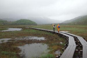 湿原を木道が続きます